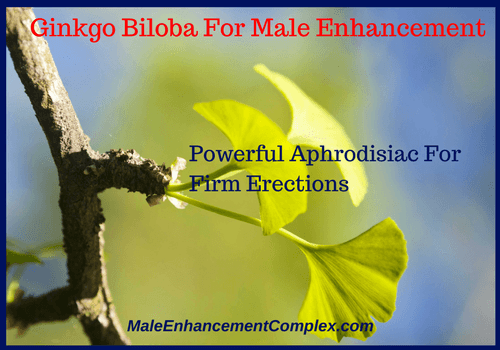 Ginkgo Biloba For Male Enhancement